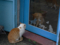 Cats of Houtong, #6943