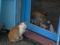Cats of Houtong, #6944