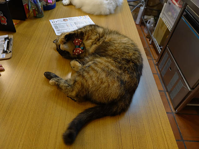 Cats of Houtong, 花皮&小白@217Cafe, #6955