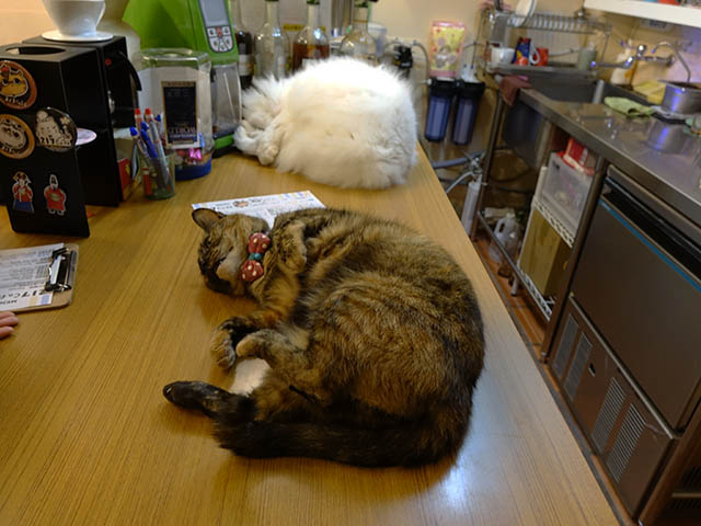 Cats of Houtong, 花皮&小白@217Cafe, #6957
