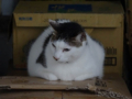 Cats of Houtong, #6970
