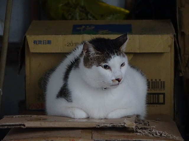 Cats of Houtong, #6973