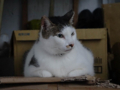 Cats of Houtong, #6975