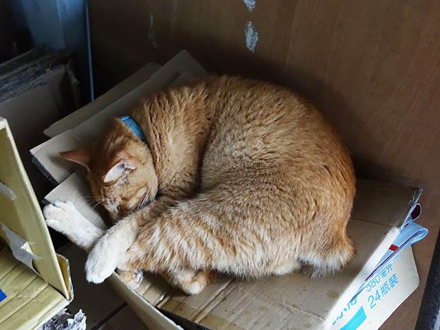 Cats of Houtong, #6977