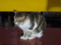 Cats of Houtong, #6984