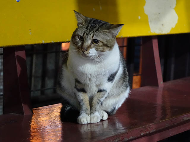Cats of Houtong, #6986