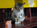 Cats of Houtong, #6987
