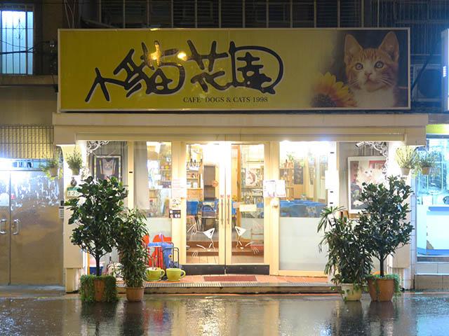 猫カフェ「小貓花園」, #1042