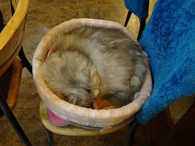 Cats of Xiao Mao Hua Yuan, #6998