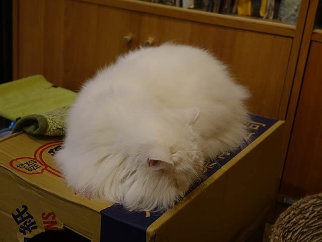 Cats of Xiao Mao Hua Yuan, #7008