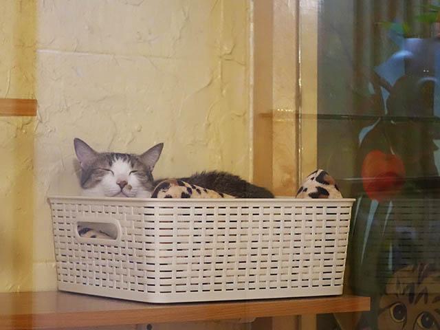Cats of Xiao Mao Hua Yuan, #7025
