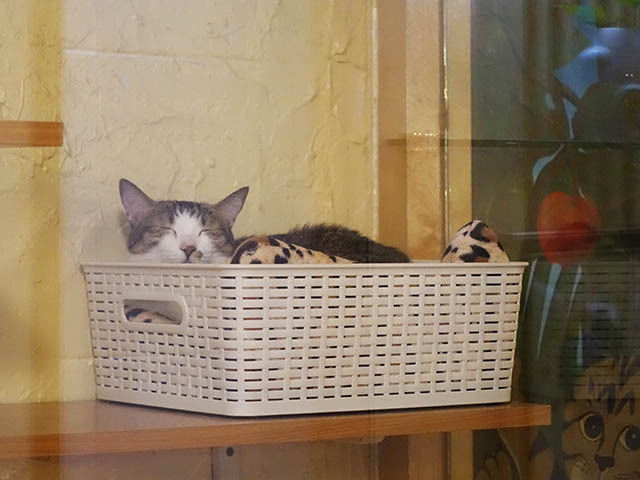 Cats of Xiao Mao Hua Yuan, #7026