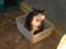 Cats of Xiao Mao Hua Yuan, #7027
