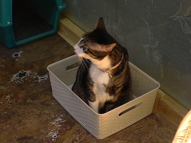 Cats of Xiao Mao Hua Yuan, #7028