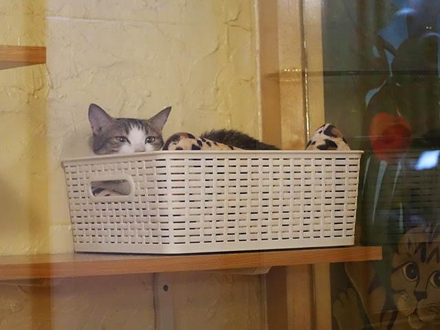 Cats of Xiao Mao Hua Yuan, #7032