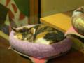 Cats of Xiao Mao Hua Yuan, #7034