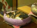 Cats of Xiao Mao Hua Yuan, #7035