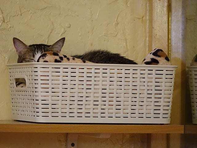 Cats of Xiao Mao Hua Yuan, #7039
