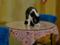 Cats of Xiao Mao Hua Yuan, #7043