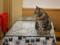 Cats of Xiao Mao Hua Yuan, #7044