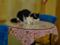 Cats of Xiao Mao Hua Yuan, #7045