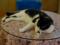 Cats of Xiao Mao Hua Yuan, #7046
