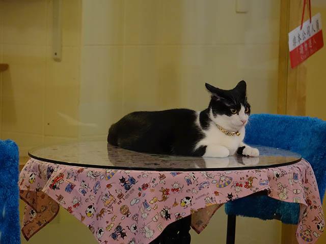 Cats of Xiao Mao Hua Yuan, #7048