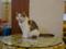 Cats of Xiao Mao Hua Yuan, #7052