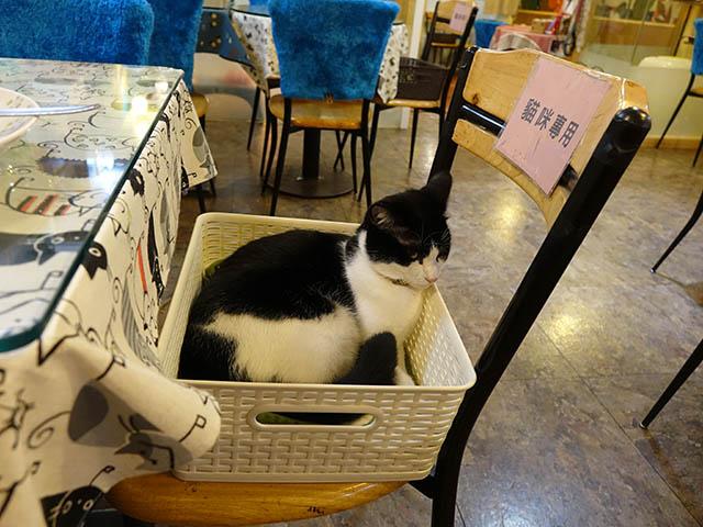 Cats of Xiao Mao Hua Yuan, #7056