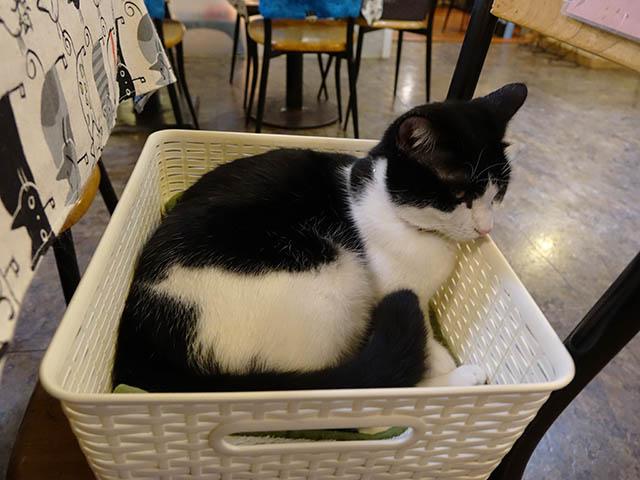 Cats of Xiao Mao Hua Yuan, #7059