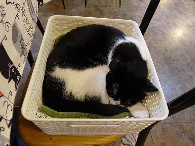 Cats of Xiao Mao Hua Yuan, #7063