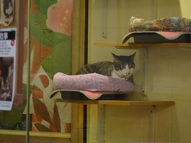 Cats of Xiao Mao Hua Yuan, #7065