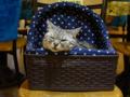 Cats of Xiao Mao Hua Yuan, #7068