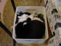 Cats of Xiao Mao Hua Yuan, #7070