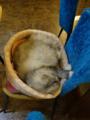 Cats of Xiao Mao Hua Yuan, #7071