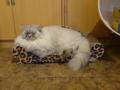 Cats of Xiao Mao Hua Yuan, #7072