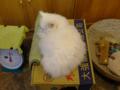 Cats of Xiao Mao Hua Yuan, #7073