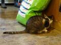 Cats of Xiao Mao Hua Yuan, #7074