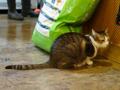 Cats of Xiao Mao Hua Yuan, #7075
