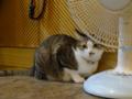 Cats of Xiao Mao Hua Yuan, #7077