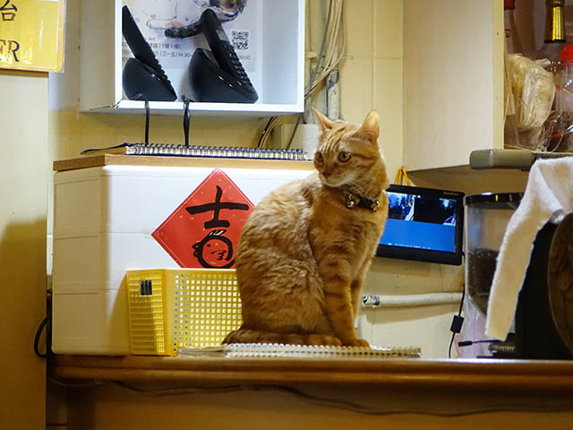 Cats of Xiao Mao Hua Yuan, #7079