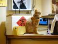 Cats of Xiao Mao Hua Yuan, #7080