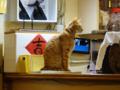 Cats of Xiao Mao Hua Yuan, #7081