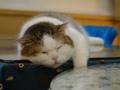 Cats of Xiao Mao Hua Yuan, #7084