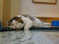 Cats of Xiao Mao Hua Yuan, #7085