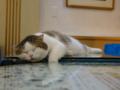 Cats of Xiao Mao Hua Yuan, #7086