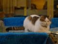 Cats of Xiao Mao Hua Yuan, #7088