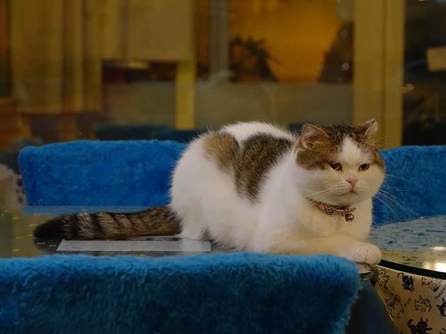 Cats of Xiao Mao Hua Yuan, #7089