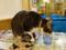 Cats of Xiao Mao Hua Yuan, #7090