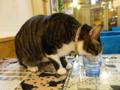 Cats of Xiao Mao Hua Yuan, #7091